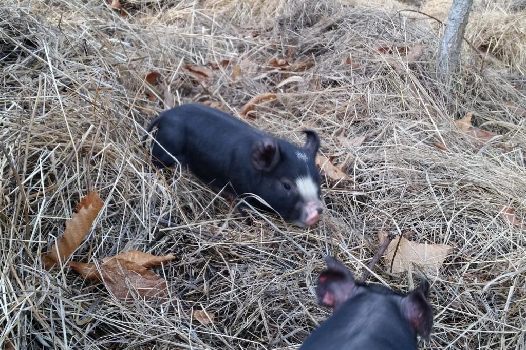 Mein Schwein